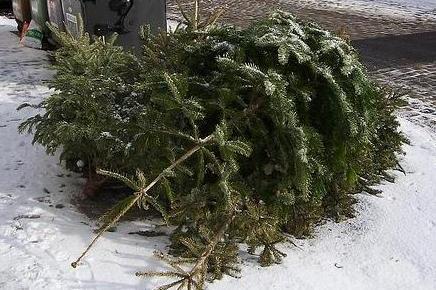 L'albero di Natale si porta al Crm - Trento - Trentino