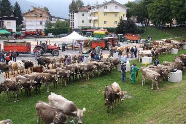 Trento Fiere Calendario.Fiera Di San Matteo Le Vacche Migliori Per Due Giorni A
