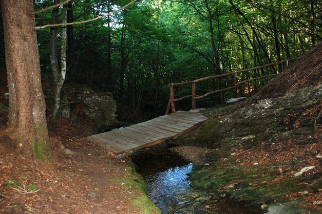 """Un """"bagno nella foresta"""" terapeutico - Lavis e Rotaliana - Trentino"""