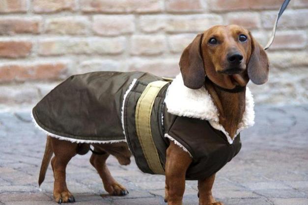 Linvasione Dei Cani Bassotto Domenica La Sausage Walk Rovereto
