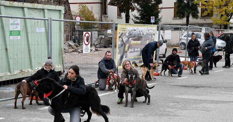 Rovereto, i cani dell'Arcadia sfilano in centro: cercano un padrone - Trentino