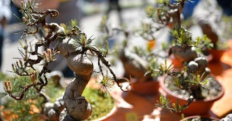 Arco il giardino dei bonsai foto trentino for Arco decorativo giardino